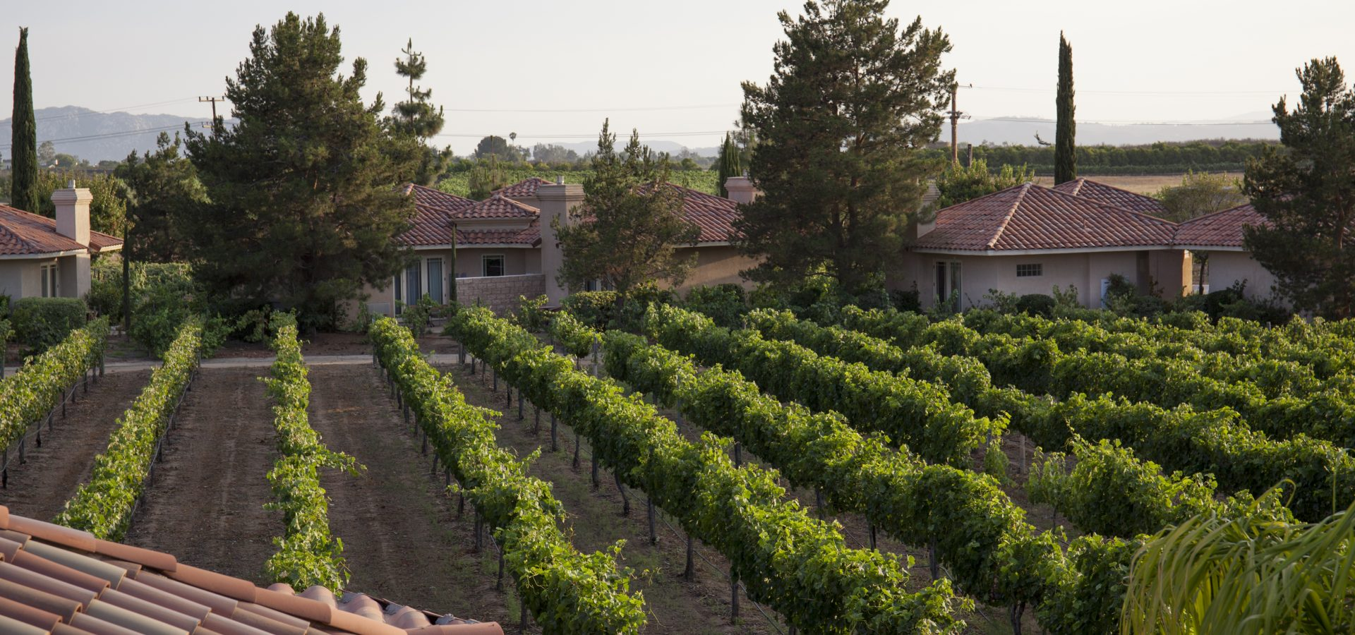 wine vineyards lined in front of south coast winery resort and spa
