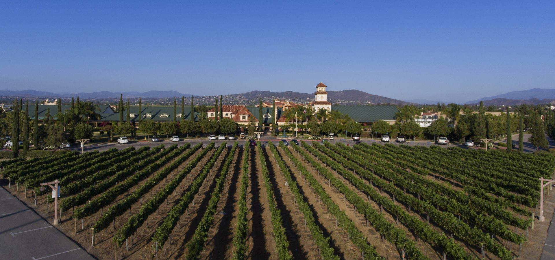 wine vineyards at our Temecula CA resort & spa