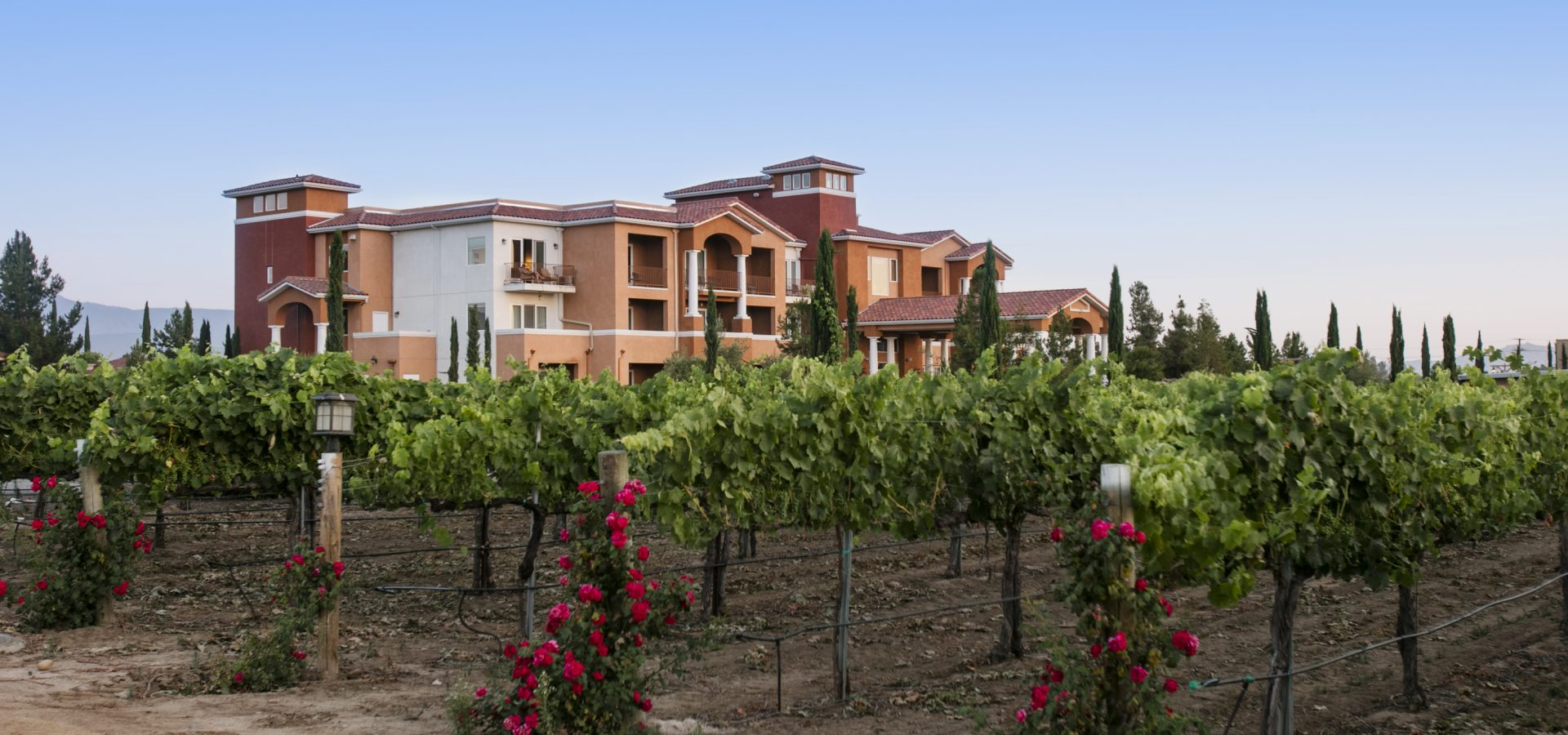 wine vineyards in front of our Temecula luxury resort and spa