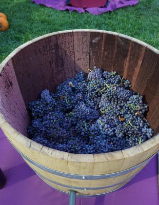 wine grapes in barrel for wine tasting at South Coast Winery Resort